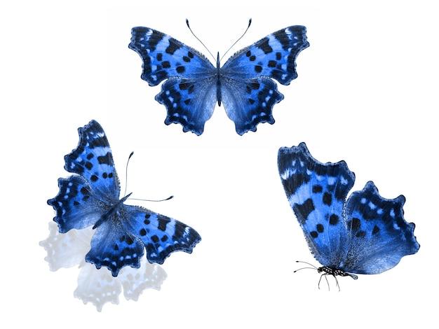 Blauwe vlinders geïsoleerd op een witte achtergrond. hoge kwaliteit foto