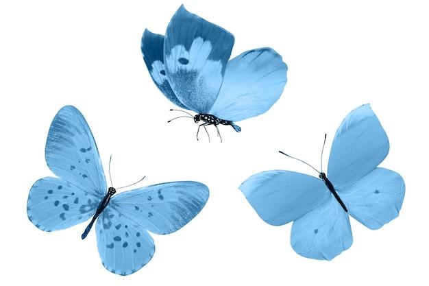 Blauwe vlinders geïsoleerd op een witte achtergrond. tropische motten. insecten voor ontwerp. aquarel verven