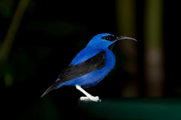 Blauwe vogel bij het vlinderpaleis in branson, missouri
