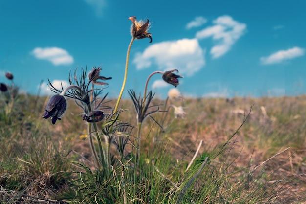 Blauwe wilde bloemen in de prairie