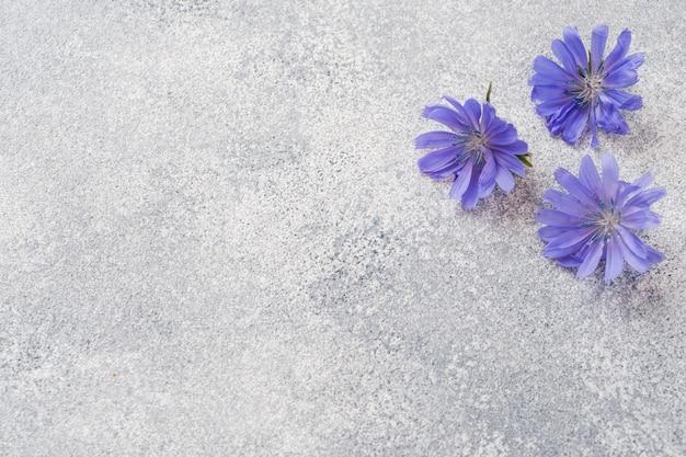 Blauwe witlofbloemen op een grijze lijst. kopie van de ruimte.