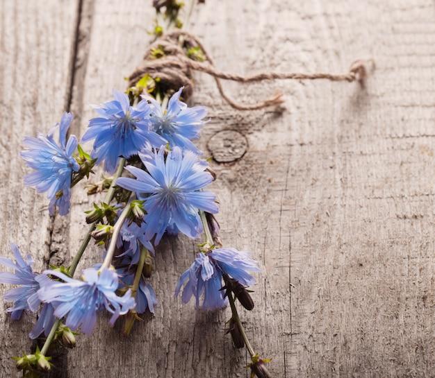 Blauwe witlofbloemen op houten achtergrond