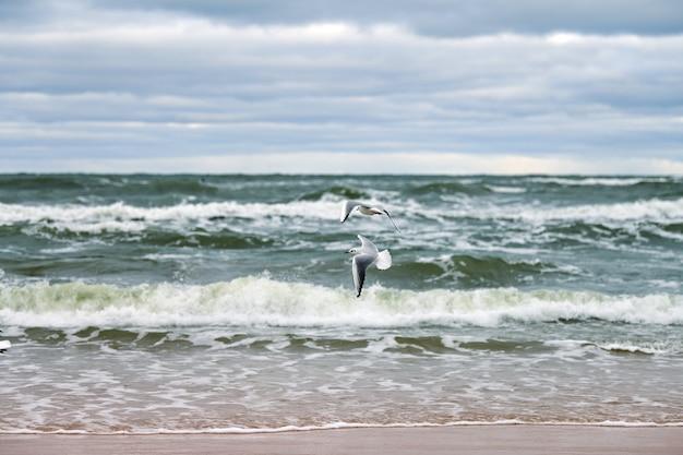 Blauwe zee en prachtige bewolkte lucht, zandstrand, vliegende meeuwen