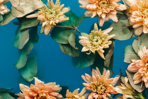 Bleke oranje chrysanten in blauw water