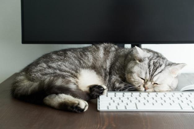 Blijf kalm en blijf thuis concept. pluizige kat slaapt op desktop naast computer.