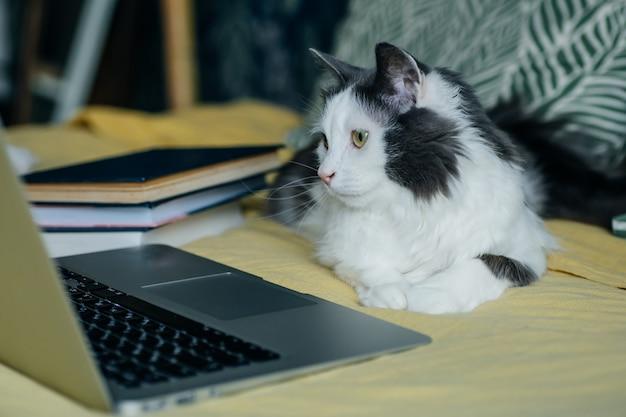 Blijf thuis, blijf veilig concept. kat achter de computer tijdens quarantaine en zelfisolatie tijdens de coronavirusepidemie.