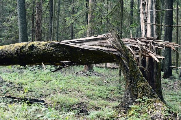 Bliksem sloeg in een boom