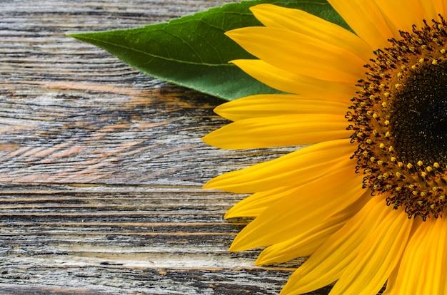 Bloeiend zonnebloemclose-up op uitstekende houten lijst.