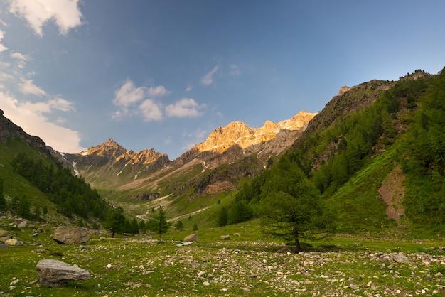Bloeiende alpiene weide en weelderige groene bos hoge hoogtebergketen bij zonsondergang