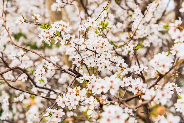 Bloeiende amandelbomen tijdens de lente in een mediterrane stad