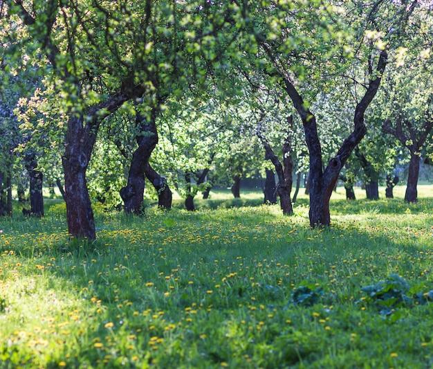 Bloeiende appelbomen