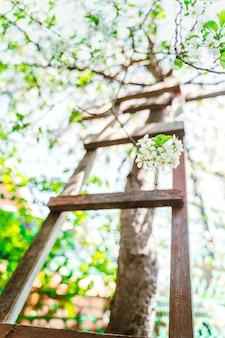 Bloeiende appelboom met houten trap