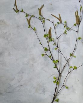 Bloeiende berkentak met jonge bladeren op een grijze achtergrond, hoogste mening, exemplaarruimte