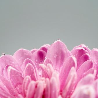Bloeiende bloem met roze natte bloemblaadjes