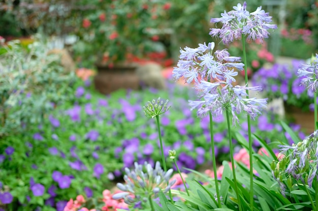 Bloeiende bloem plant in plantkunde tuin park