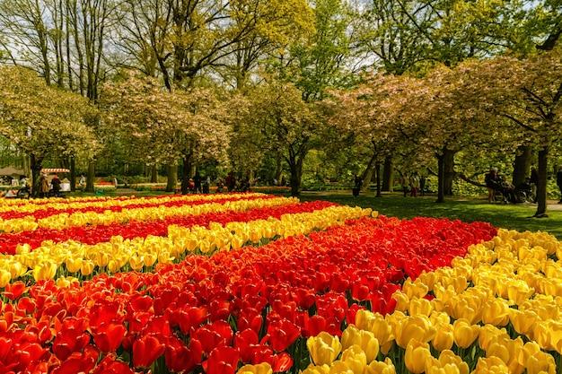 Bloeiende bloemen in een formele lentetuin.