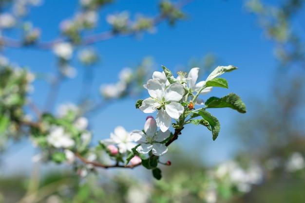 Bloeiende bloemen op boomtakken