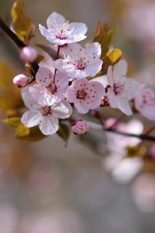 Bloeiende bloemen op de boom