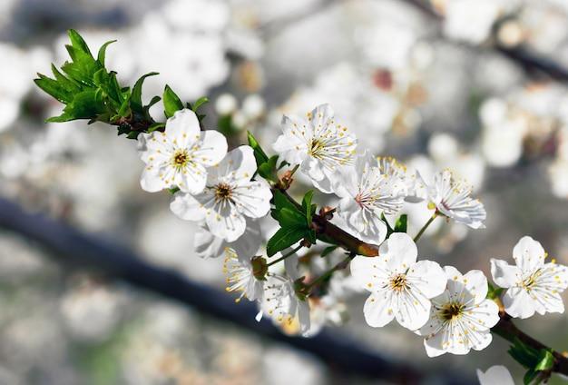 Bloeiende bloementak