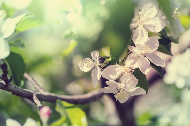 Bloeiende boom in de lentetuin.