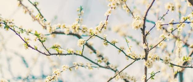 Bloeiende boom in de tuin. selectieve aandacht aard.