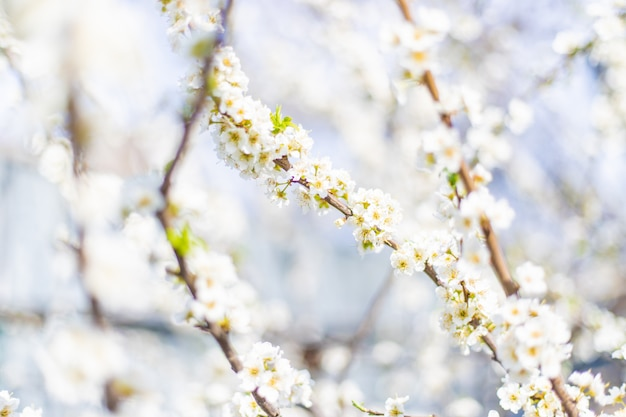 Bloeiende boom in de tuin. selectieve aandacht