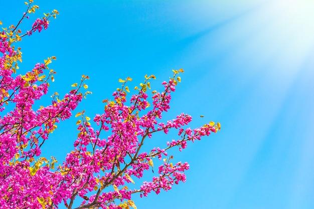Bloeiende boom op blauwe hemelachtergrond