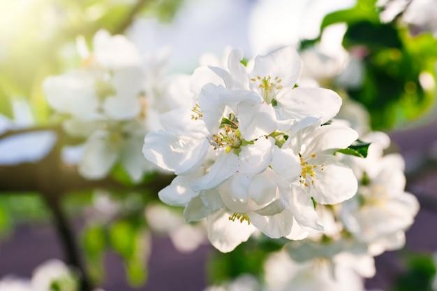 Bloeiende de lenteboom in de tuin