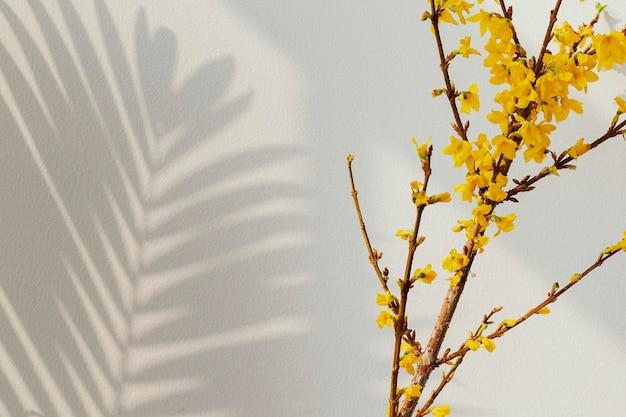Bloeiende forsythia bloemen Premium Foto