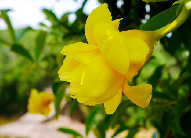 Bloeiende gele bloem