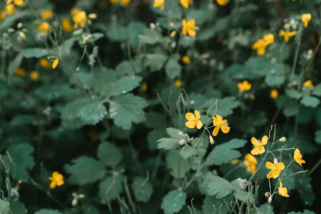 Bloeiende gele kleine bloemen met bladeren
