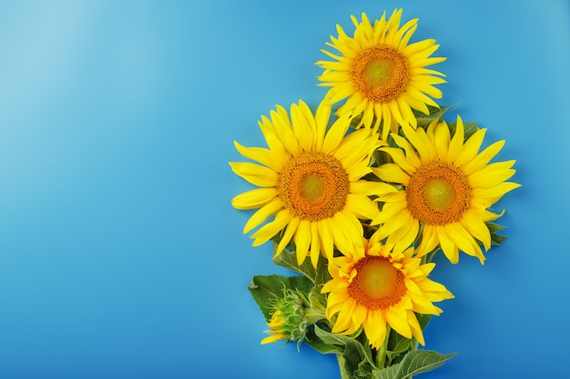 Bloeiende gele zonnebloemen op een blauwe achtergrond.