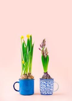 Bloeiende hyacinten en duffodil bollen ingegoten in theemokken