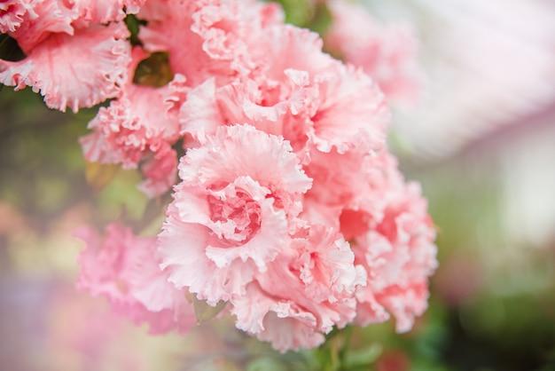 Bloeiende hybride azalia rhododendron hybridum-selectie in een kas.