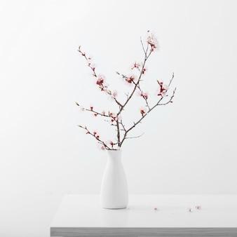 Bloeiende kersentak in vaas op witte achtergrond