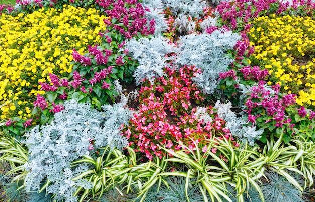 Bloeiende kleurrijke bloembedden in het park van de de herfststad