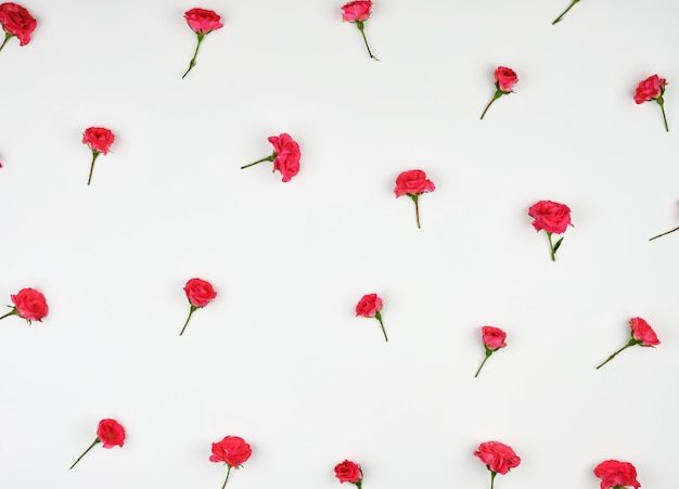 Bloeiende knoppen van roze rozen op wit
