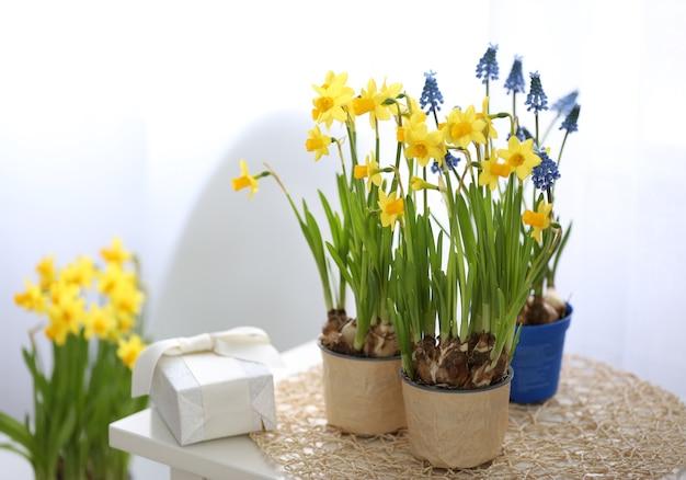 Bloeiende narcissenbloemen in bloempotten binnenshuis