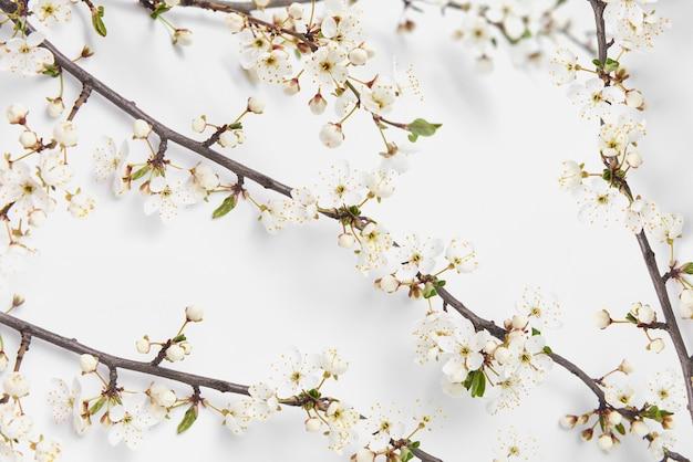 Bloeiende natuurlijke takken van tedere kersenbloemen achtergrond