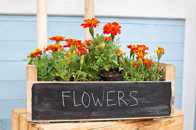 Bloeiende oranje bloemen in pot op veranda groeiende kamerplanten in pot