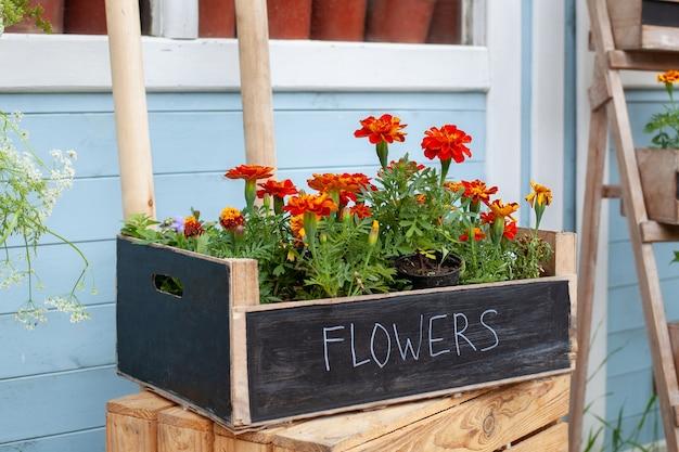 Bloeiende oranje tagetes bloemen in pot op veranda kamerplanten in pot kweken