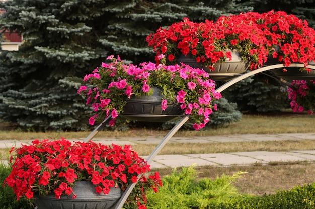 Bloeiende petunia's in potten in een stadspark, horizontale foto