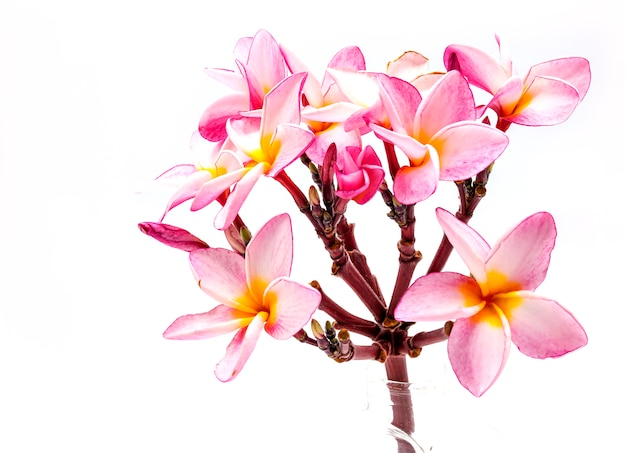 Bloeiende phumalia of champa-bloem