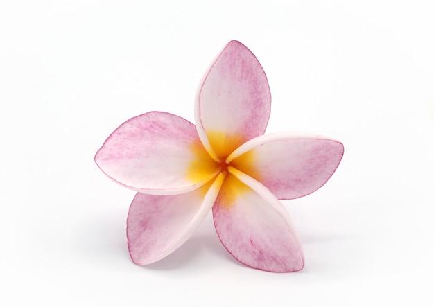 Bloeiende phumalia of champa-bloem Premium Foto