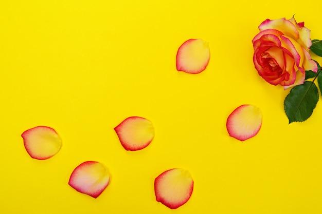 Bloeiende roos en bloemblaadjes