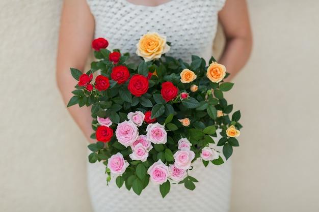 Bloeiende roos in een mand in vrouwelijke hand