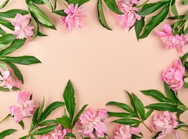 Bloeiende roze pioenknoppen op een perzik