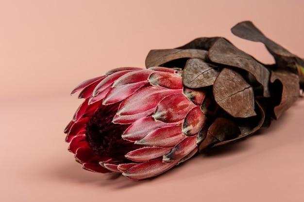 Bloeiende roze protea bloem