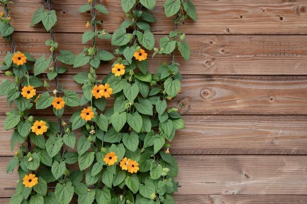Bloeiende struik van oranje zomerbloemen op een oppervlak van houten bruine planken.