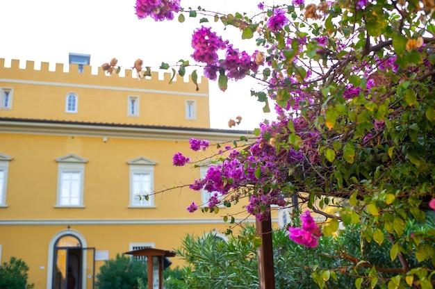 Bloeiende struiken op de achtergrond van een oude villa in de toscaanse regio
